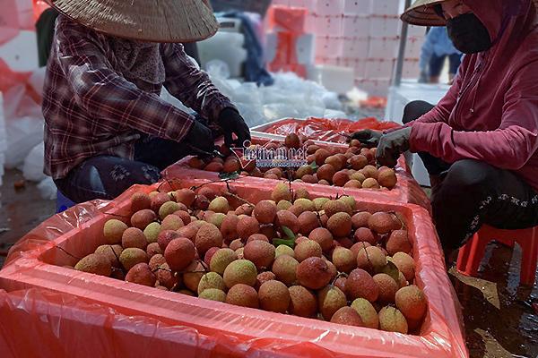 Mở lối riêng, Trung Quốc chuyển tiền chốt 3 vạn tấn hàng đặc sản