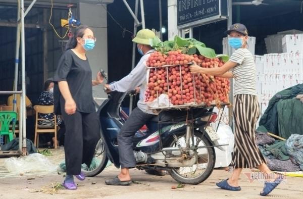 Vượt tâm dịch, Bắc Giang giữ vững vùng vải ngàn tỷ