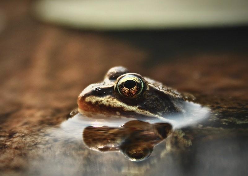 Nuốt 5 con ếch sống để chữa bệnh, người đàn ông suýt chết