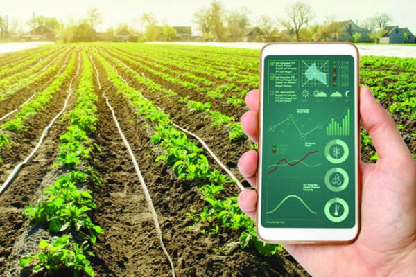 Sẵn sàng cho chuyển đổi số trong nông nghiệp