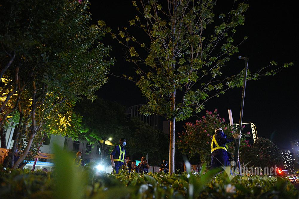 Hà Nội đánh chuyển hàng phong lá đỏ trong đêm hè nóng cháy