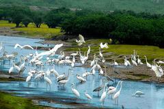 Nỗ lực bảo tồn hệ sinh thái đa dạng, góp phần ứng phó biến đổi khí hậu