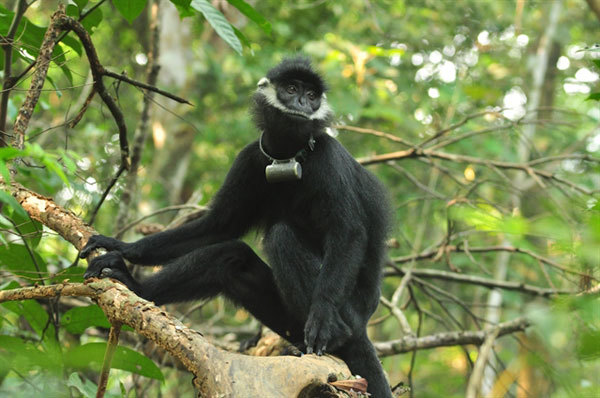 Protected zone established for endangered primates in Quang Binh