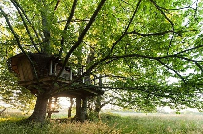 Những 'tuyệt tác' nhà lơ lửng trên cây đẹp tới mức khó tin