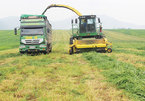 Agricultural ventures stack up despite lack of profit guarantee