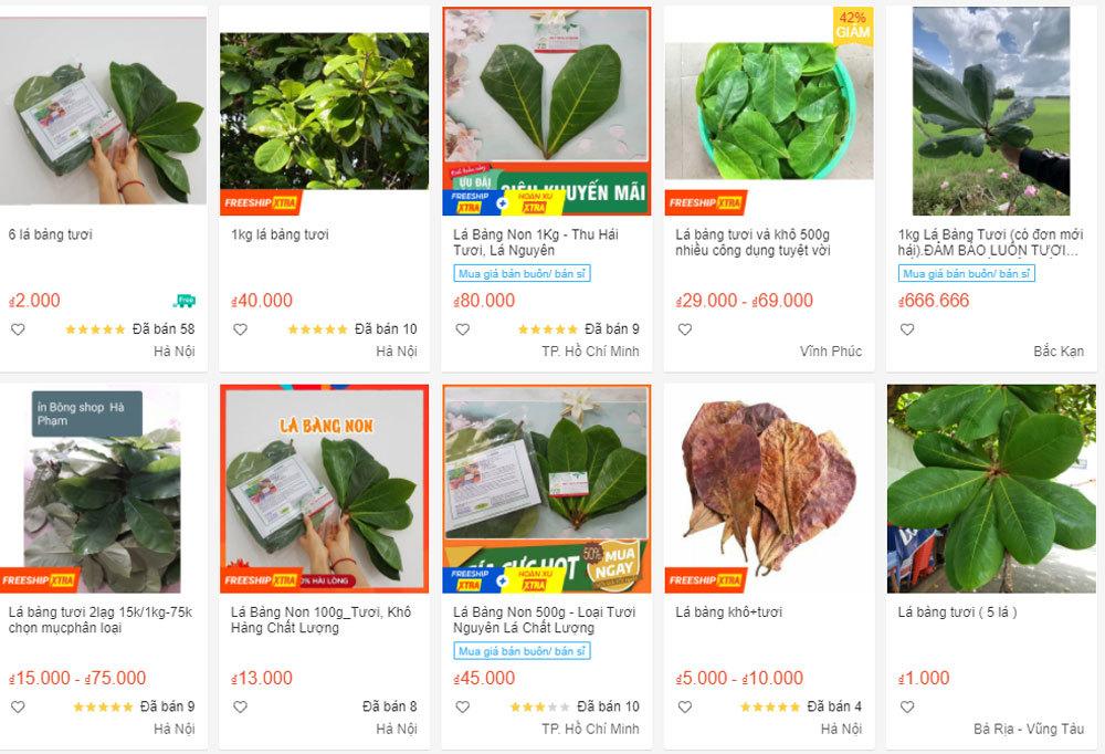 Thứ lá bình thường, bỏ đi ở Việt Nam bỗng nhiên được săn mua giá cao