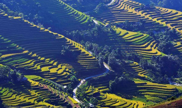 Ha Giang Culture and Tourism Week,Hoang Su Phi terraced fields