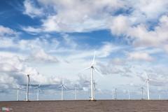 Đông Hải: Kinh đô năng lượng tái tạo