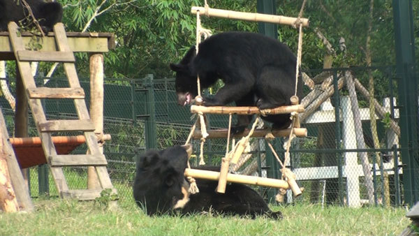 Performing bears handed over to sanctuary: a big step forward