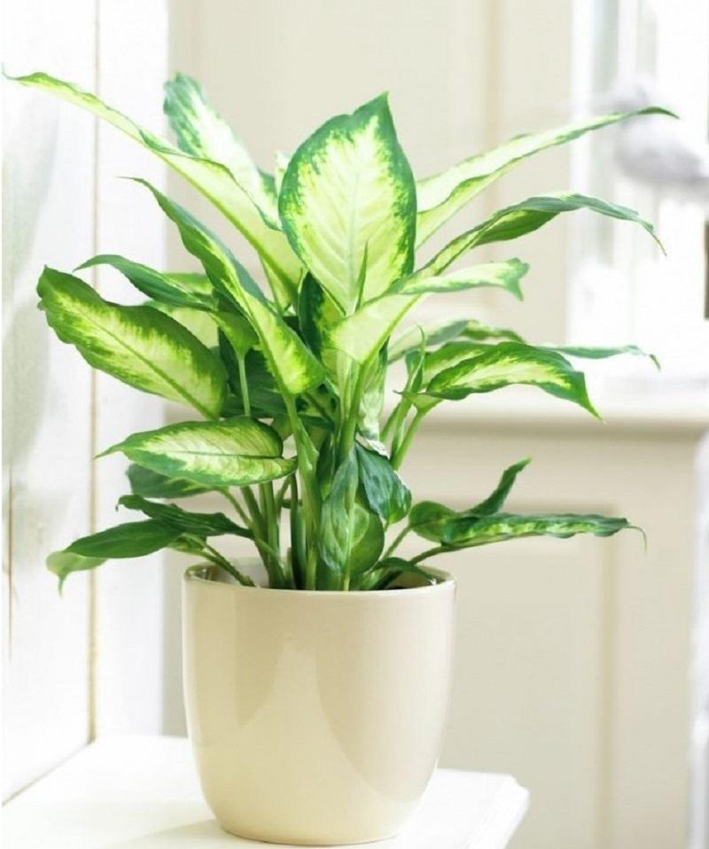 Top 8 cây trồng cho nhà nhỏ, có tác dụng thải độc thần kỳ