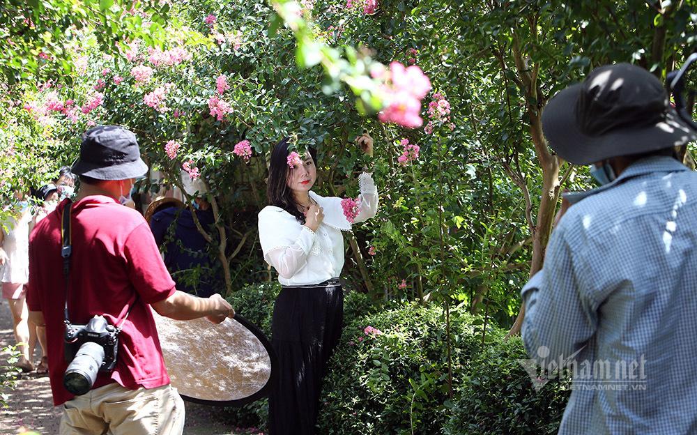 Đổ về chụp ảnh trên con đường hoa tường vi đẹp suốt 4 mùa ở Hà Nội