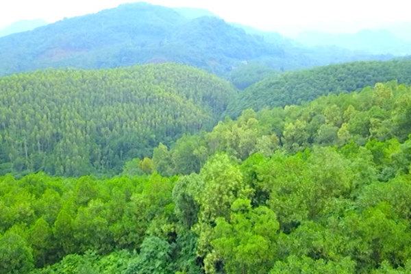 Phát triển lâm nghiệp bền vững tỉnh Tuyên Quang giai đoạn 2021-2030