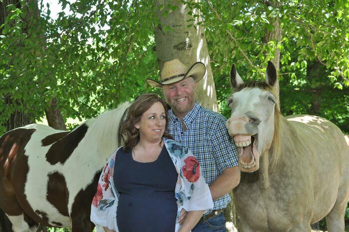 Chú ngựa sở hữu nụ cười 'gây sốt' mạng xã hội