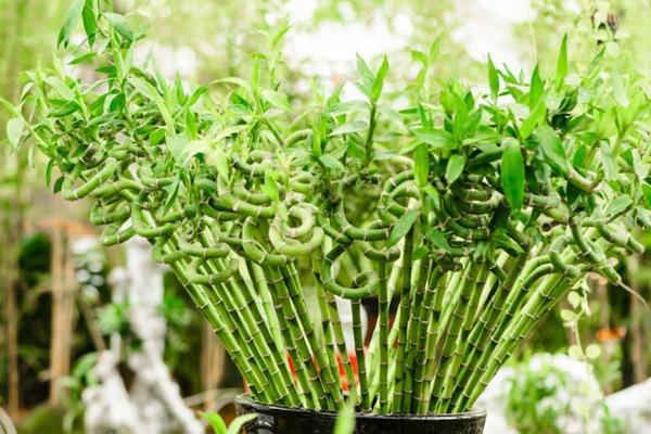 Mẹo chọn cây trồng trong nhà bếp vừa đẹp vừa có tác dụng khử mùi