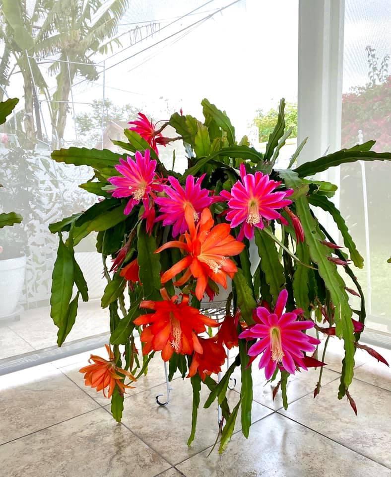 Người phụ nữ Việt gom hàng trăm loài hoa vào nhà vườn 600m2 trên đất Mỹ