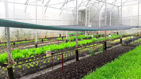 Vietnam to establish several hi-tech agricultural zones