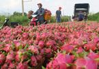 Farm produce exports: specialties reach new markets