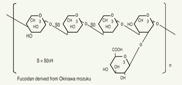 Fucoidan nguồn gốc tảo nâu - 'món quà' quý cho sức khỏe