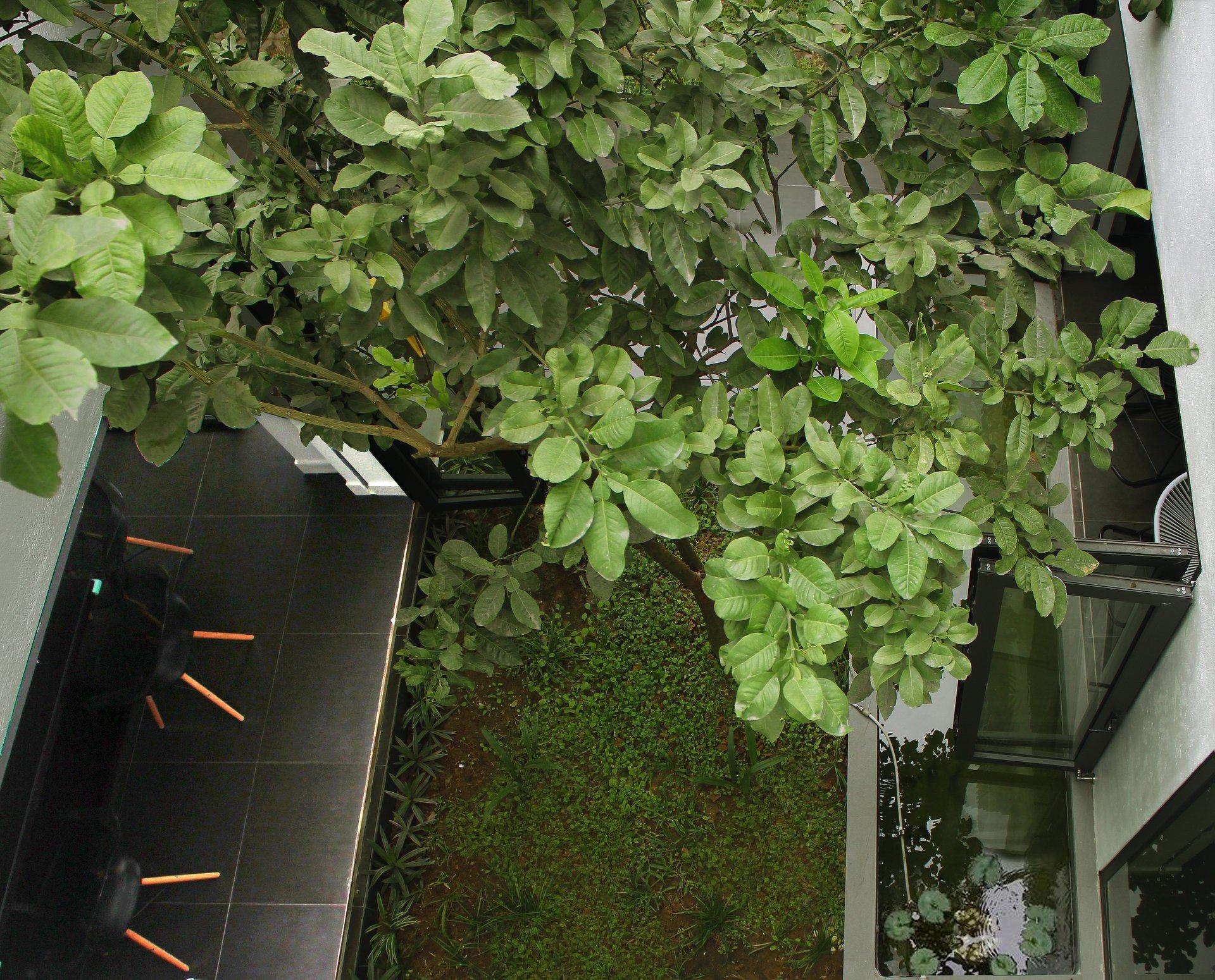 Ngẩn ngơ trước khu vườn bí mật trong ngôi nhà màu trắng ở Hải Phòng
