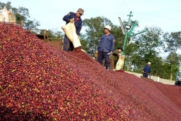 VN agricultural exports hit record: achievements and worries