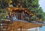 Ngôi nhà trên cây nhãn độc đáo nhất ở Thủ đô, giá chỉ 130 triệu đồng