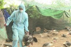 Lào Cai quyết liệt ngăn chặn virus cúm gia cầm độc lực cao