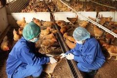 Tuyên Quang kiểm soát cúm gia cầm A/H5N6, không để dịch bùng phát