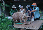 'Nhà còn con lợn 120kg, tôi mang tới ủng hộ người dân TP.HCM'