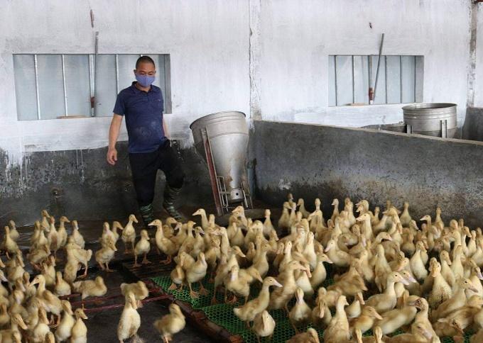 """Xã Vũ Bảo quyết tâm phòng chống cúm gia cầm, không để """"dịch chồng dịch"""""""