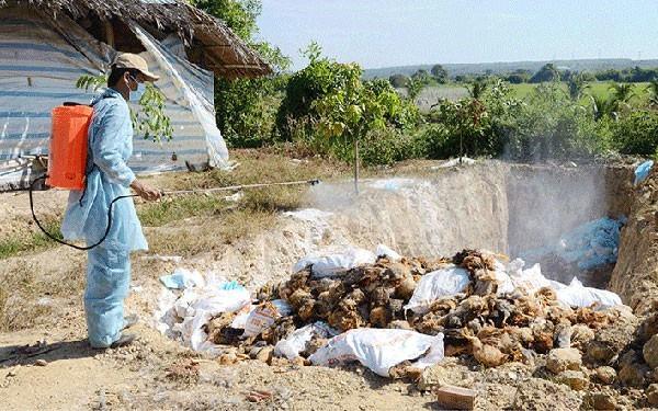 Trà Vinh tăng cường bảo vệ an toàn môi trường chăn nuôi trước dịch cúm gia cầm