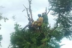 Người phụ nữ bị điện giật tử vong mắc kẹt trên cành cây