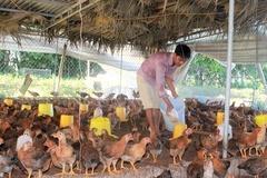 Đắk Nông lập rào chắn chống cúm gia cầm bằng giải pháp nuôi gà an toàn sinh học