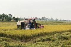 Gieo mạ, cấy lúa bằng máy để tăng năng suất, nâng thu nhập