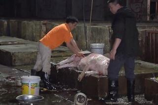 Lào Cai giết mổ gia súc tập trung, thiết lập vùng an toàn dịch bệnh