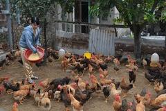 Ninh Bình: Khuyến khích sản xuất các chế phẩm sinh học thay thế kháng sinh trong chăn nuôi gia cầm