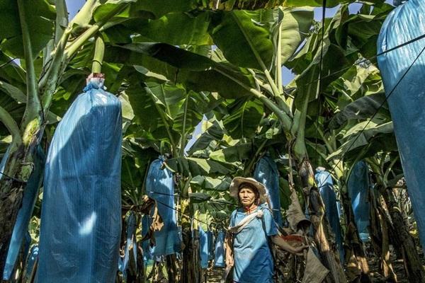Doanh nghiệp Trung Quốc ráo riết gom đất khắp thế giới