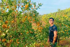 Gây dựng trang trại cam để truyền cảm hứng cho tinh thần người Việt dùng hàng Việt