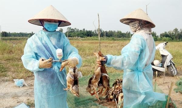 Xuất hiện ổ dịch A/H5N8, Bắc Ninh nỗ lực hướng dẫn người dân tiêm vắc-xin cho gia cầm