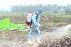 Bắc Ninh quyết tâm phòng, chống dịch cúm gia cầm H5N8 trên tinh thần chủ động, kiên quyết, sáng tạo
