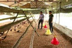 Tuyên Quang: Tập huấn chăn nuôi gia cầm an toàn sinh học