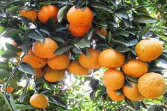 Nông sản Hà Giang chinh phục thị trường quốc tế