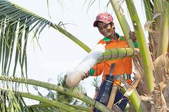 Đưa tinh túy của cây dừa Bến Tre vươn ra biển lớn