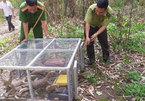 VND1 billion fines imposed on violators of wildlife protection regulations
