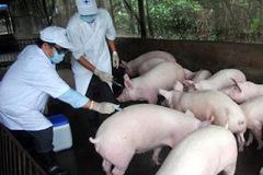 Thực hiện đồng bộ các biện pháp chuyên môn ngay từ cơ sở để phòng, ngừa dịch lở mồm long móng
