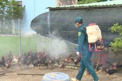Hà Nội: 100% địa phương hoàn thành kế hoạch khử khuẩn, tiêu độc chuồng trại đợt 1/2021