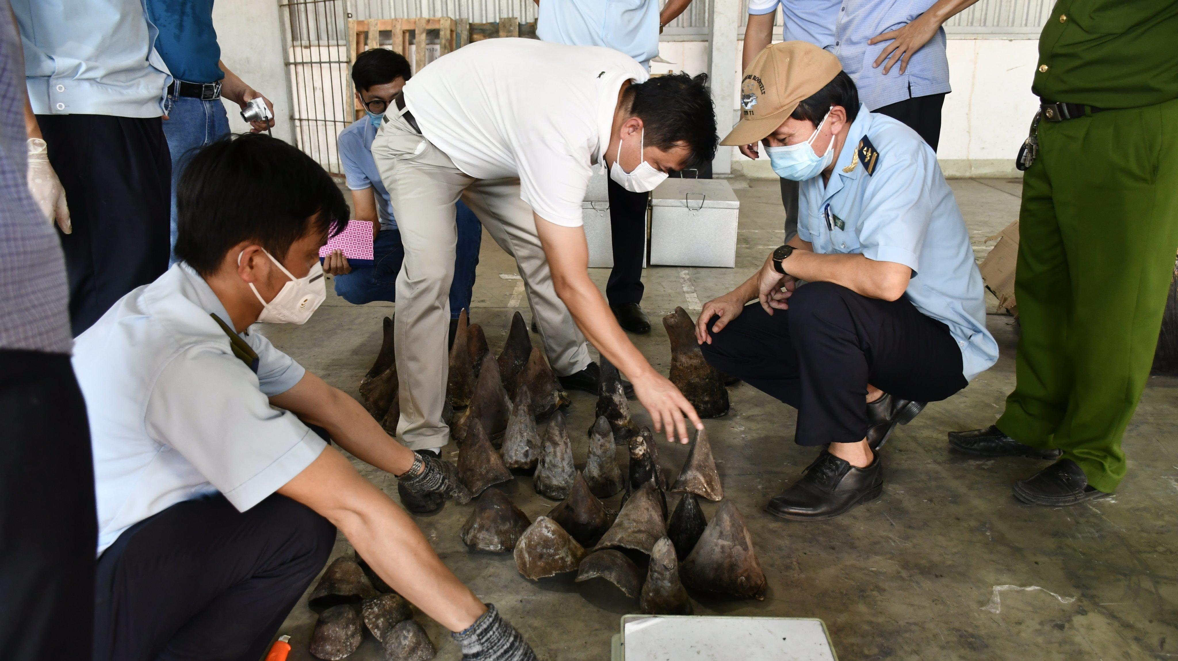 138 kg sừng tê giác 'núp bóng' gỗ Nam Phi chuyển về cảng Đà Nẵng