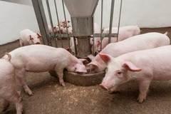 Phát triển ngành chăn nuôi trong bối cảnh an toàn dịch bệnh, bảo vệ môi trường