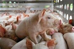 Trung Thành chú trọng tuyền truyền tới người chăn nuôi các giải pháp phòng ngừa dịch bệnh