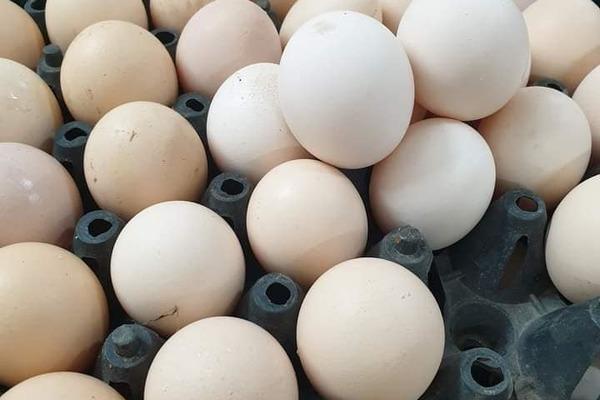 Mỗi ngày, TP.HCM thiếu 400.000 quả trứng và 1.500 tấn rau củ