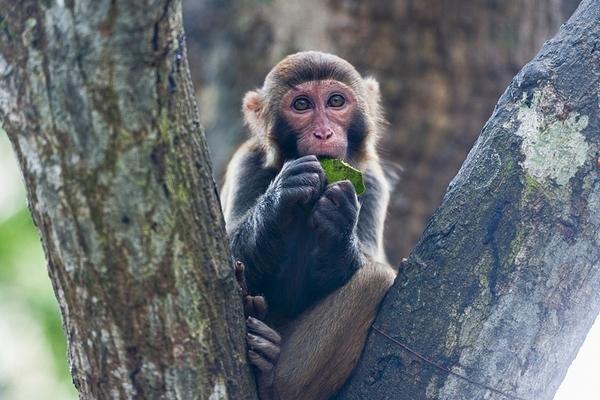 Trung Quốc ghi nhận ca tử vong đầu tiên do virus hiếm gặp từ khỉ